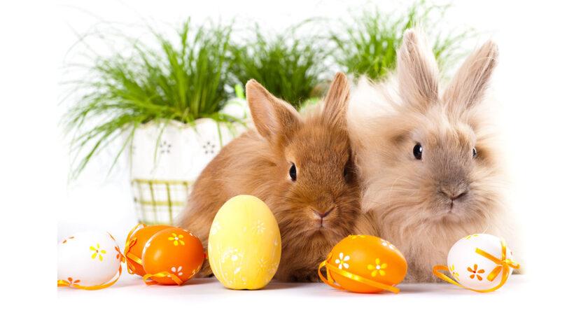 życzenia Wielkanocne Wierszyki I życzenia Na Wielkanoc