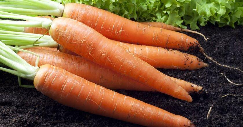 Świeża marchewka wzmacnia odporność organizmu