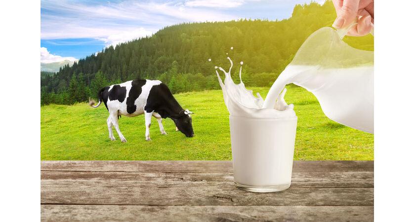 Siarka organiczna występuje w niepasteryzowanym krowim mleku