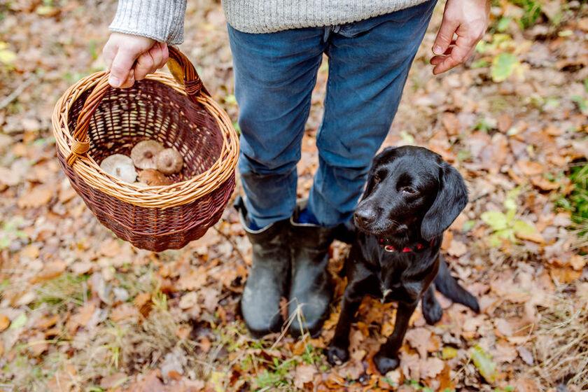 Kobieta szuka grzybów z psem