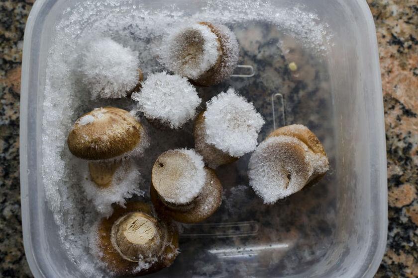 Zamrożone grzyby