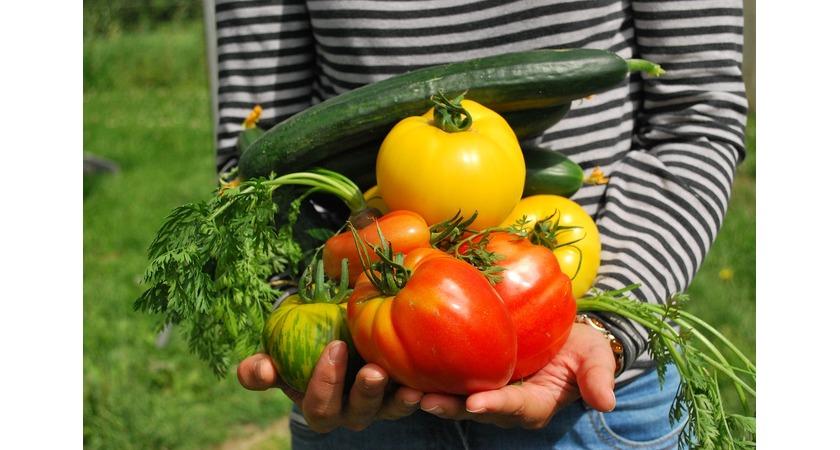 Osoba trzymająca w dłoniach warzywa