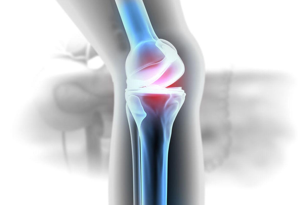 Wizualizacja stawu kolanowego