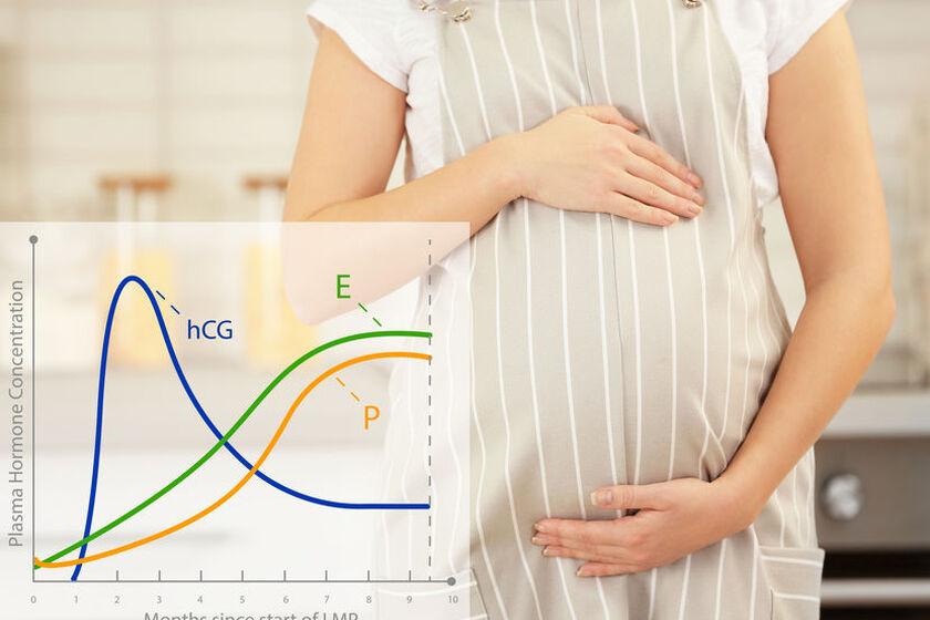 Wykres wzrostu stężenia progesteronu u ciężarnej