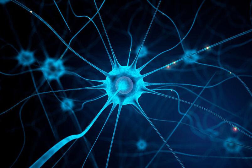 Wizualizacja komórek nerwowych