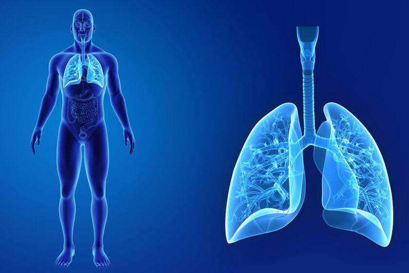 Wizualizacja górnych i dolnych dróg oddechowych