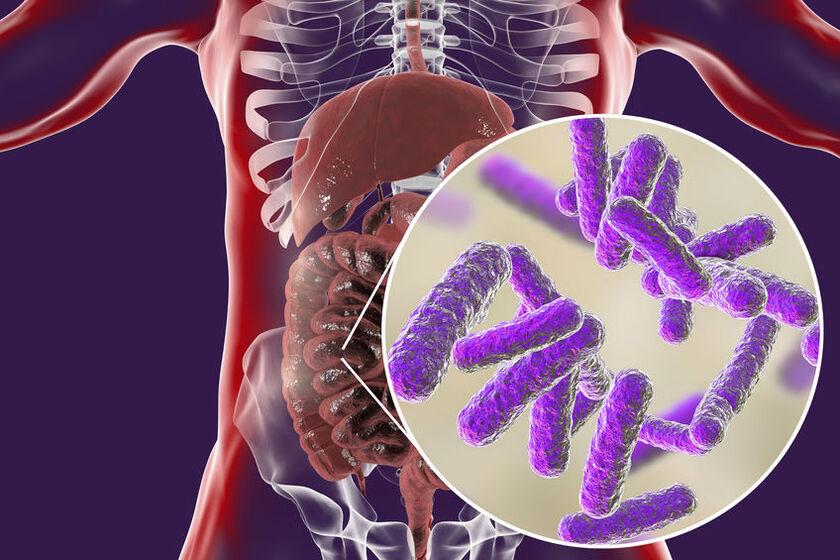 Wizualizacja mikrobiomu
