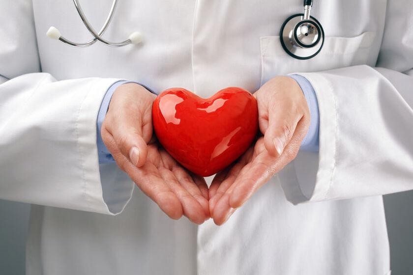 Kardiolog trzyma model serca