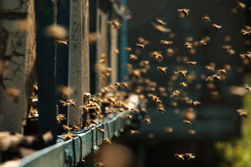 Pszczoły latające przy ulach