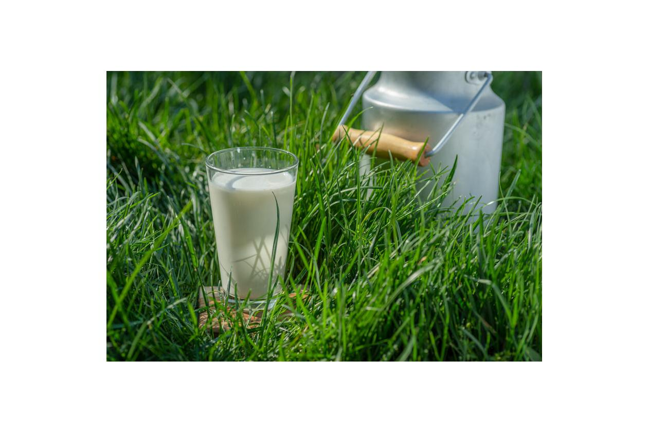 Mleko zawiera siarę bydlęcą