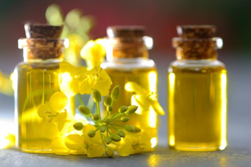Renesans oleju rzepakowego