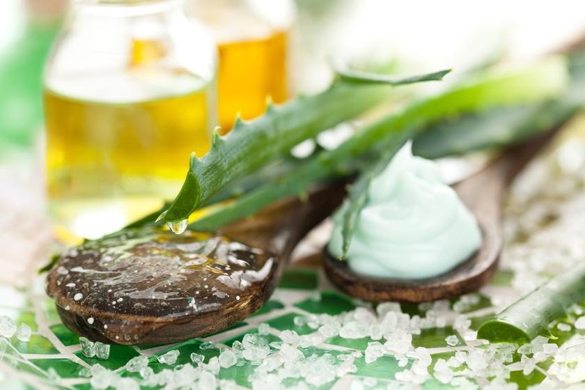 Aloes – właściwości lecznicze i pielęgnacyjne