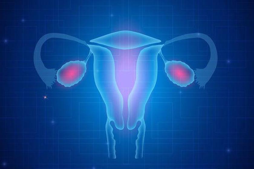 Jajowody u kobiety