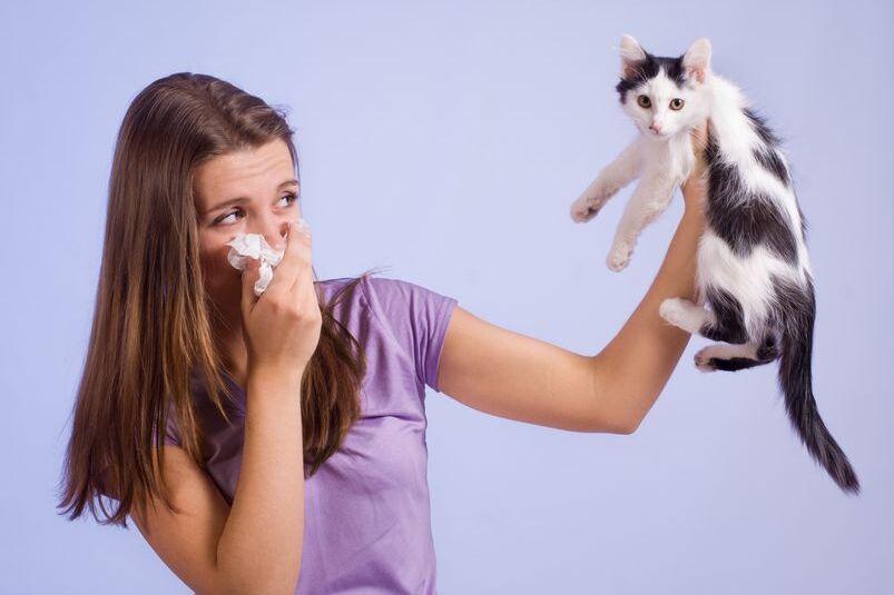 Alergeny z sierści kota