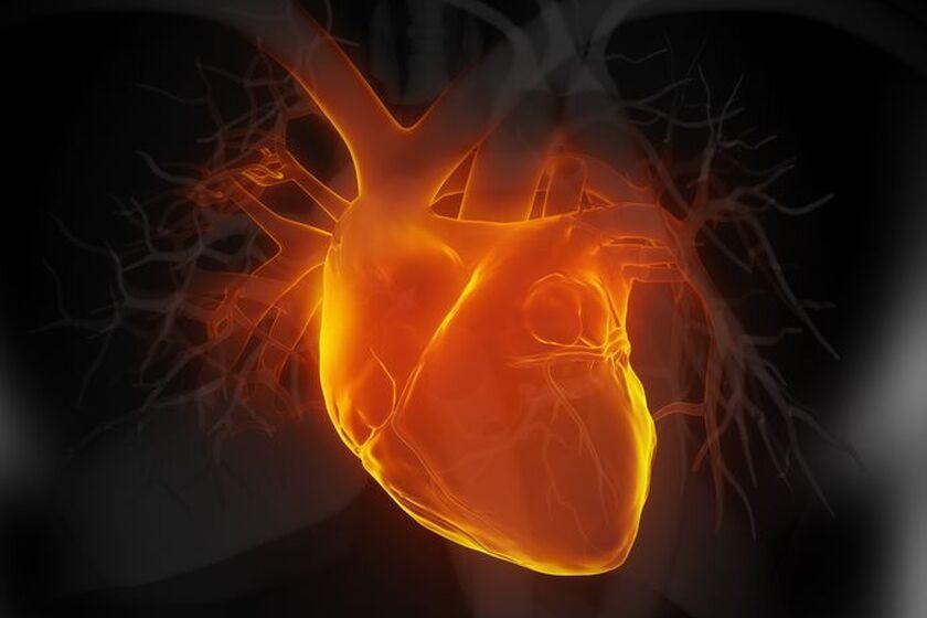 Serce człowieka