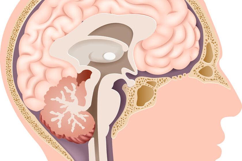 Płat przysadki mózgowej u człowieka
