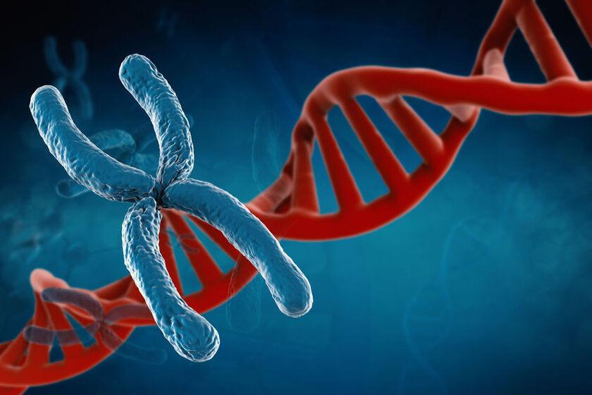 Fragment chromosomu 22