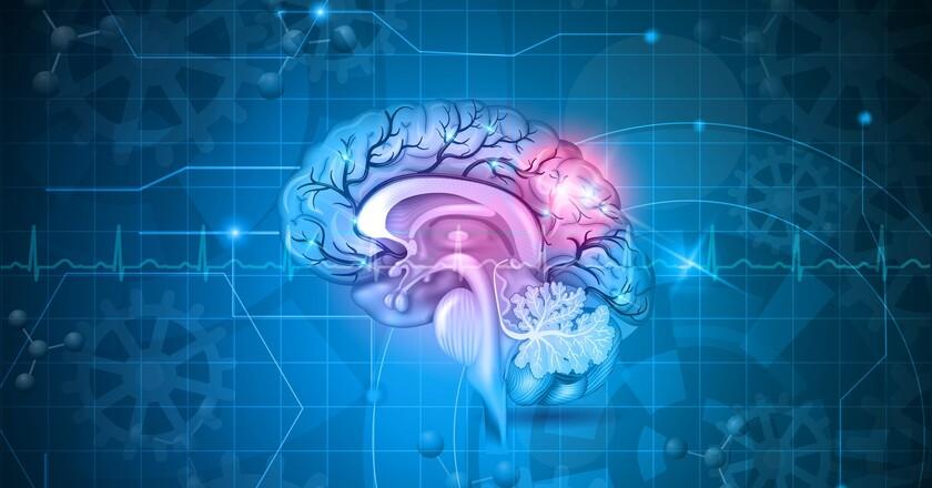 Koncentracja mózgu