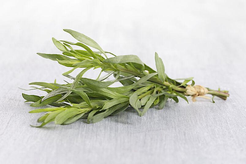 Zielone liście rośliny estragon