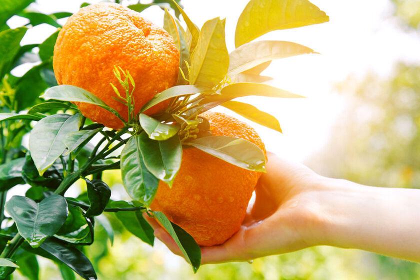 Jakie witaminy ma pomarańcza
